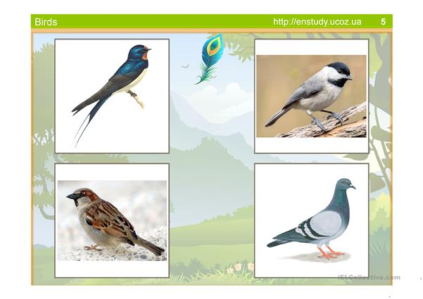 ANIMAL KINGDOM - LEARN THE NAMES OF BIRDS (POWERPOINT)